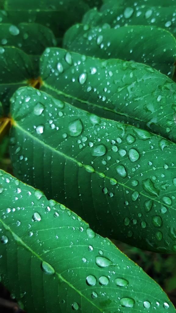 Big Drops by adristiamalia