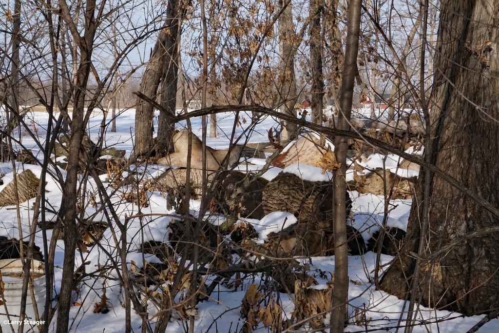 January walk in the woods 1 by larrysphotos
