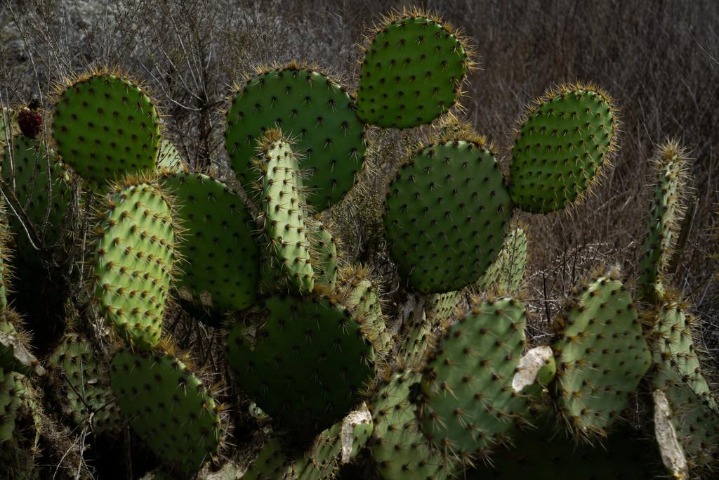 Cactus contrast. by milestonevisualmedia