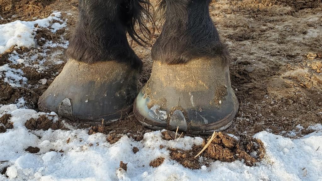 Dainty Feet  by wyomingsis