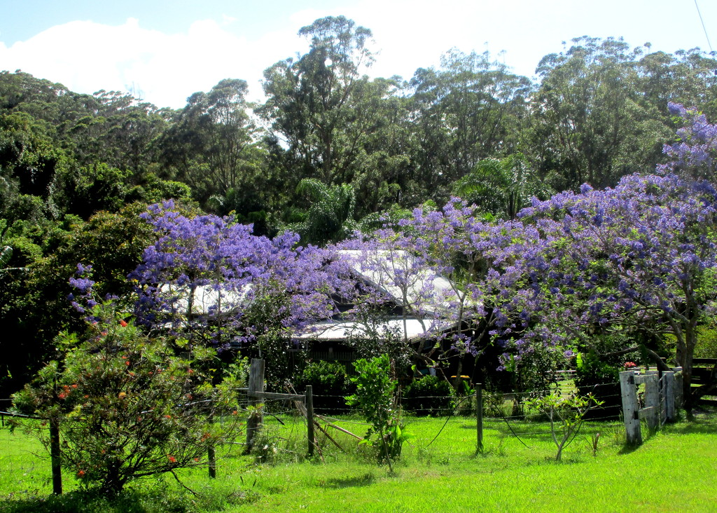 Homestead on Mt Glorious  in the spring by 777margo