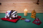 14th Jan 2021 - Miss Piggy Chants, Prays and Meditates for World Peace