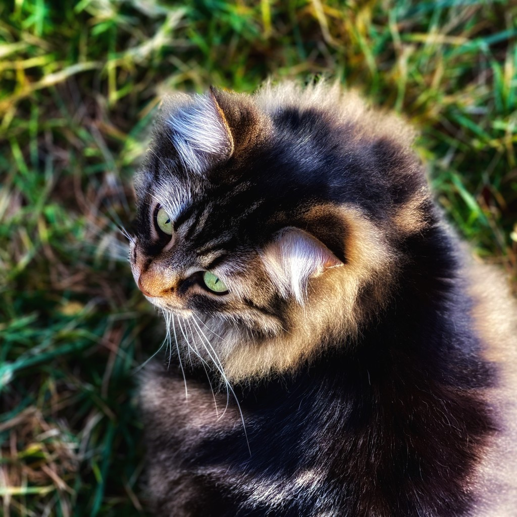 Time Spent With Cats by gardenfolk