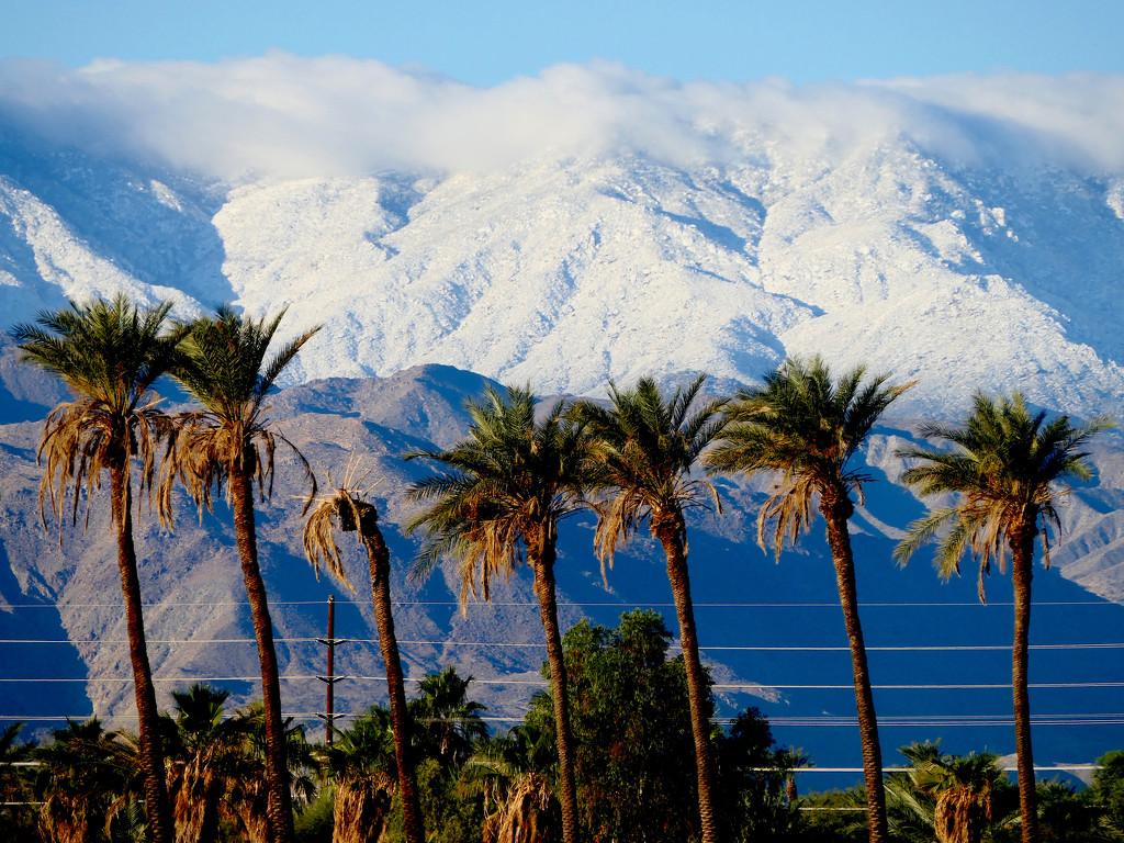 Snowy Backdrop by redy4et