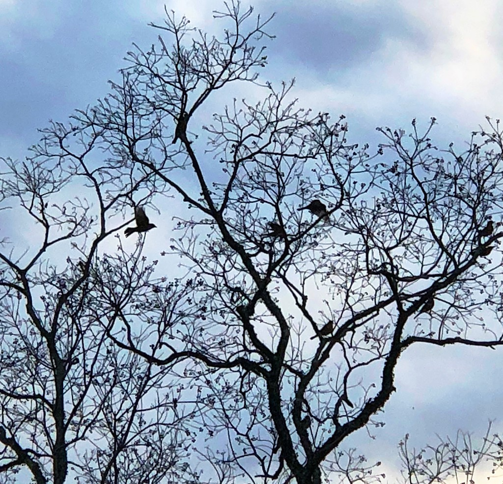 Winter tree with birds by congaree