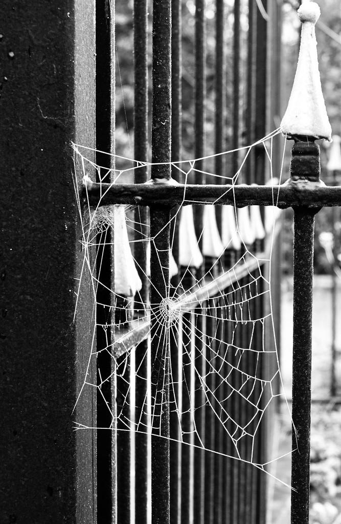 Frozen web by chris17