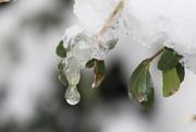 15th Jan 2021 - Ice Drop