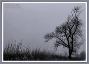 15th Jan 2021 - Lone Tree
