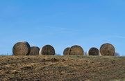 15th Jan 2021 - Hay bales up on the hill