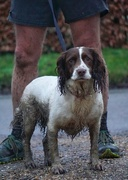 15th Jan 2021 - 6 muddy legs