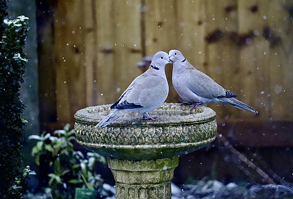 Love Birds by carole_sandford