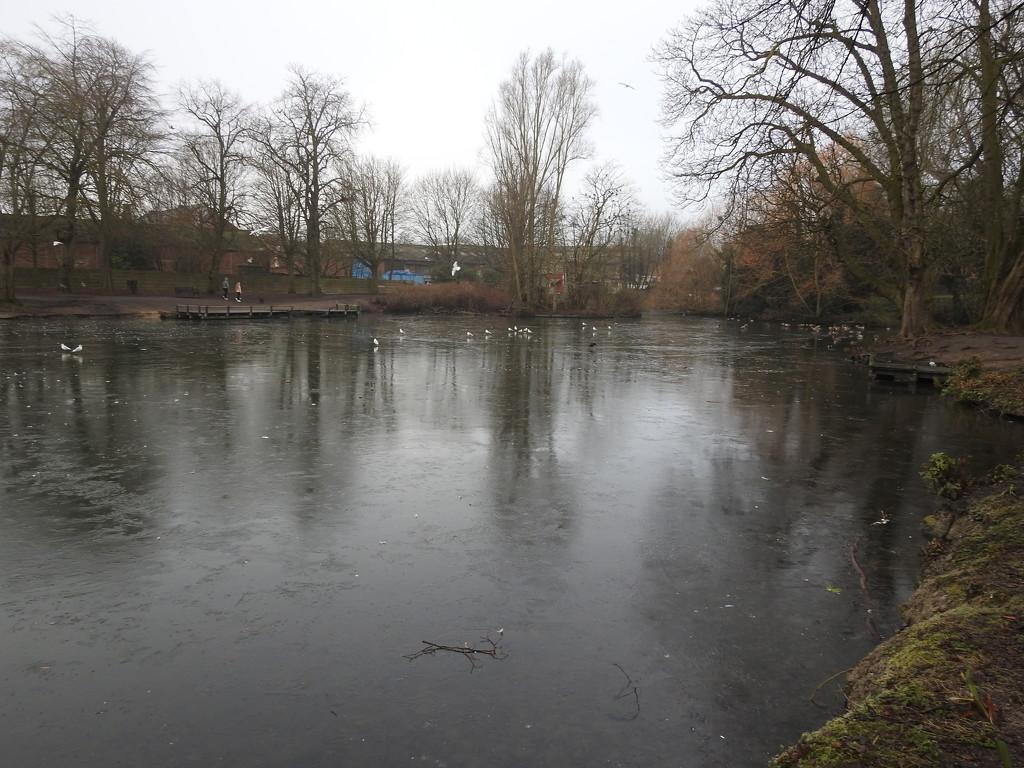Frozen Pond Reflections by oldjosh