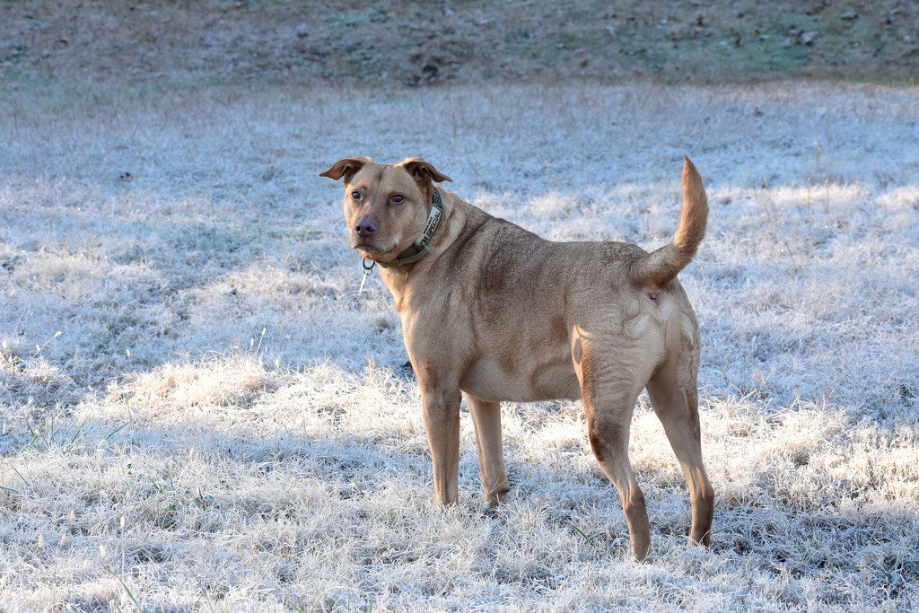 Seamus in the morning frost by homeschoolmom