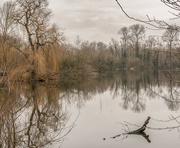 15th Jan 2021 - The Heron Lake