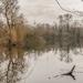 The Heron Lake by mave