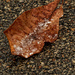 ice crystals on a leaf