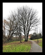 8th Jan 2021 - Tree by the Path