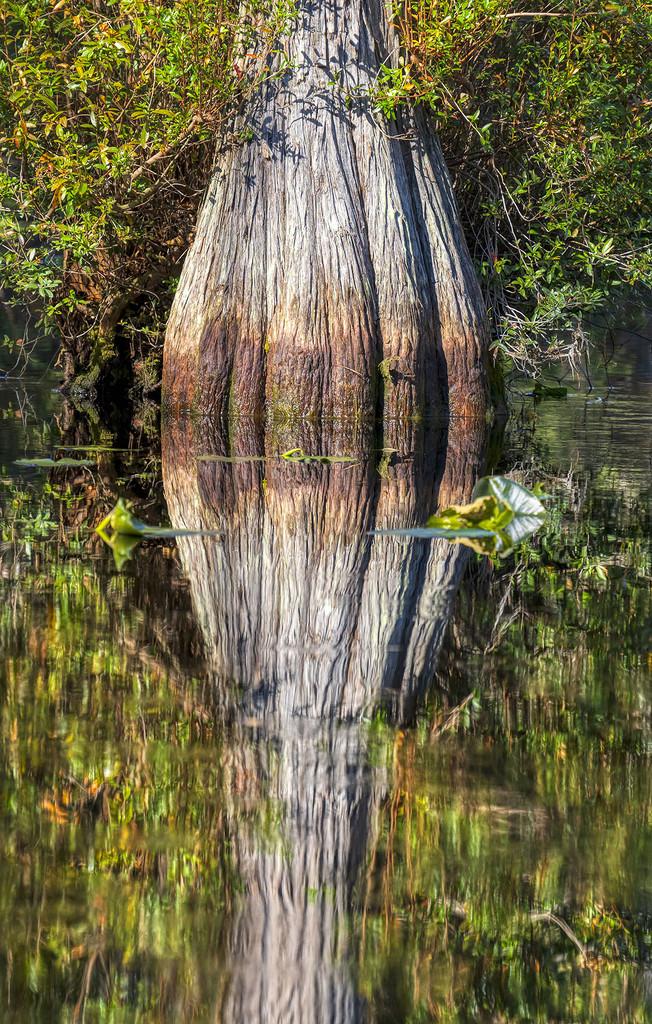 Cypress by kvphoto