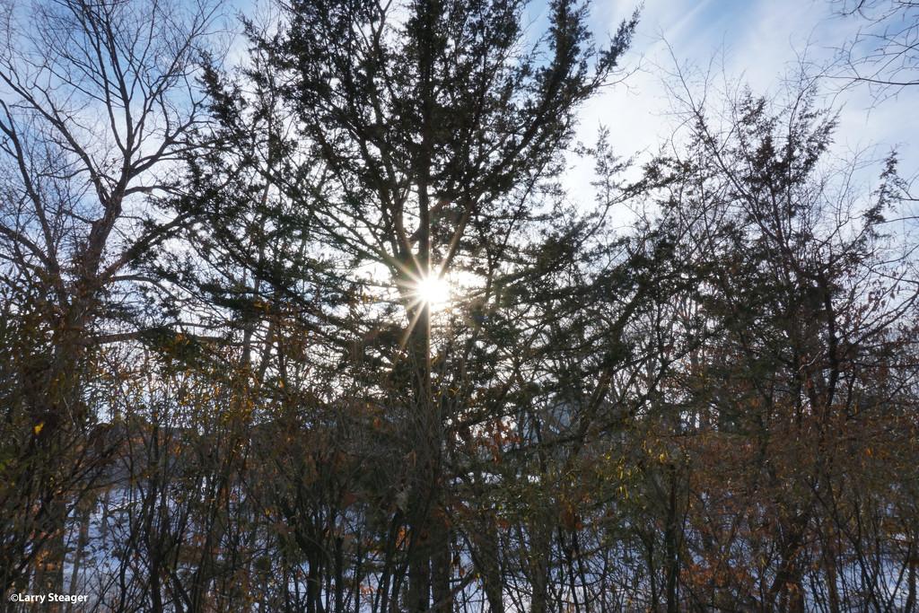 Sun through a winter tree by larrysphotos