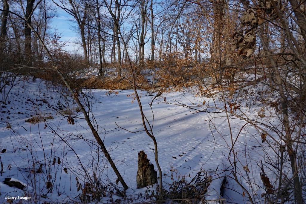 Frozen pond by larrysphotos