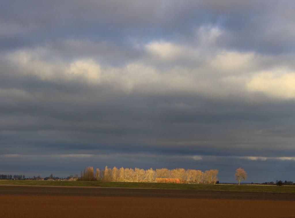Farm in the spotlight by pyrrhula