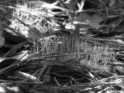 16th Jan 2021 - Cushion moss seeds...