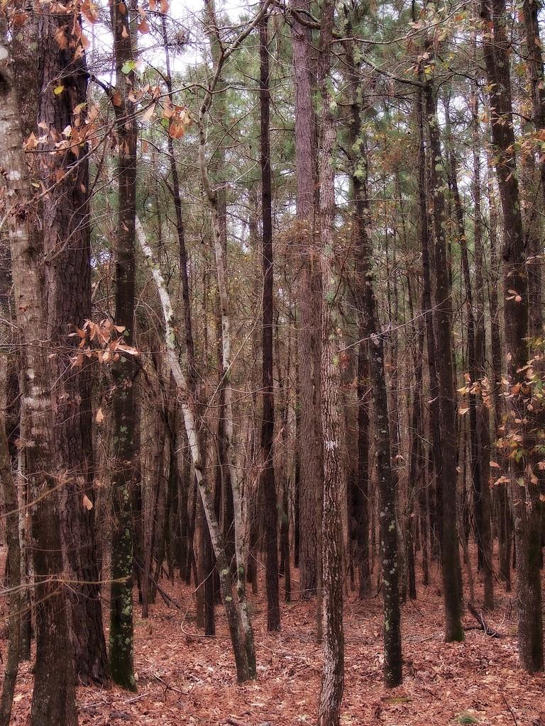 Winter woods... by marlboromaam