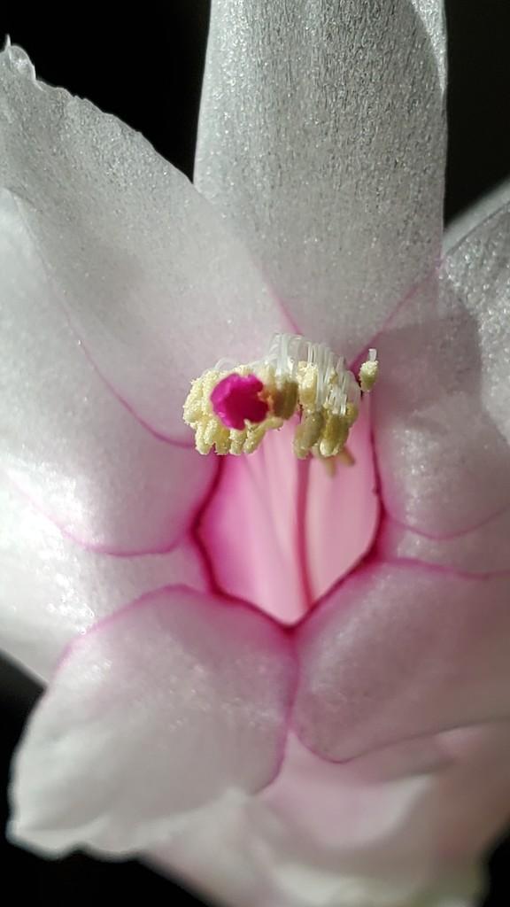 Perpetual Bloom?  by wyomingsis