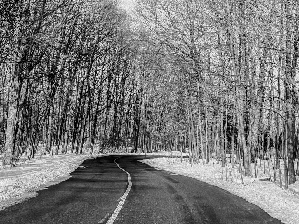 Road of Leafless Trees by sprphotos