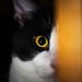 Hidey Cat