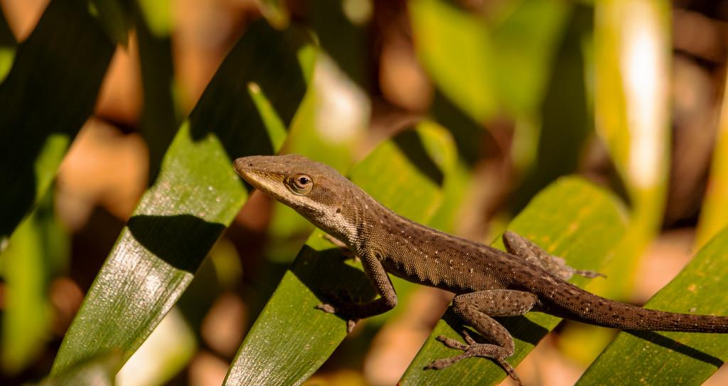 The Lizard Gettiing a Little Sun! by rickster549