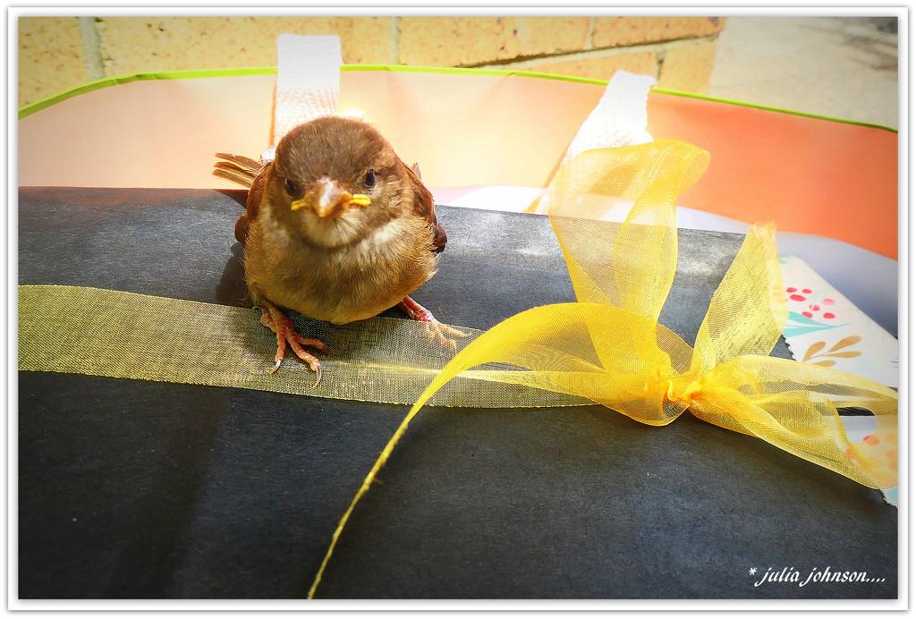 Birthday Bird... by julzmaioro