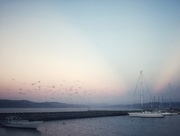 16th Jan 2021 - Clyde Quay
