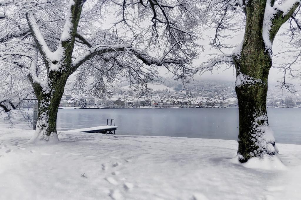 2021-01-16 refreshing swim in the lake anyone? by mona65