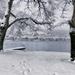 2021-01-16 refreshing swim in the lake anyone?