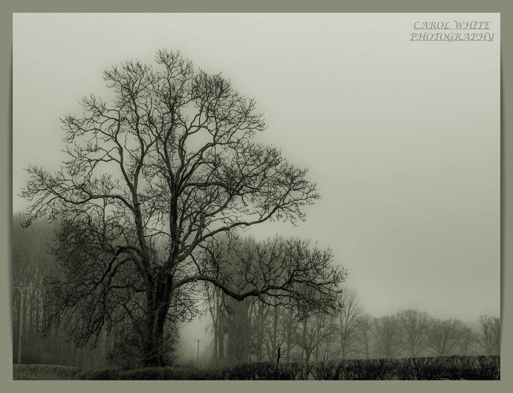 Misty Morning by carolmw