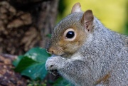 16th Jan 2021 - MR SQUIRREL