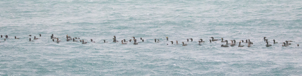 Shags by lifeat60degrees