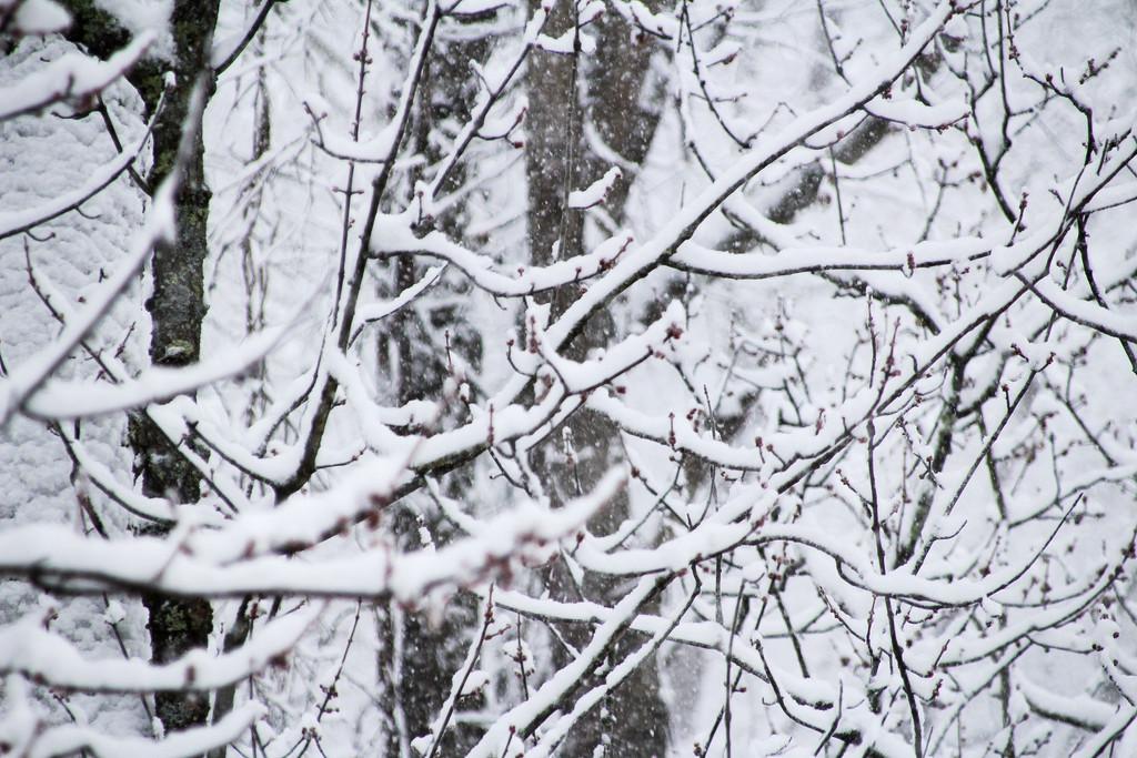 Let it snow, let it snow, let it snow by mittens