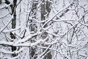 16th Jan 2021 - Let it snow, let it snow, let it snow