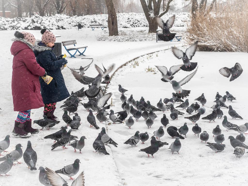 Feeding birds in winter by haskar