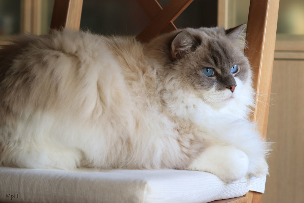 Cozy cat by cherrymartina