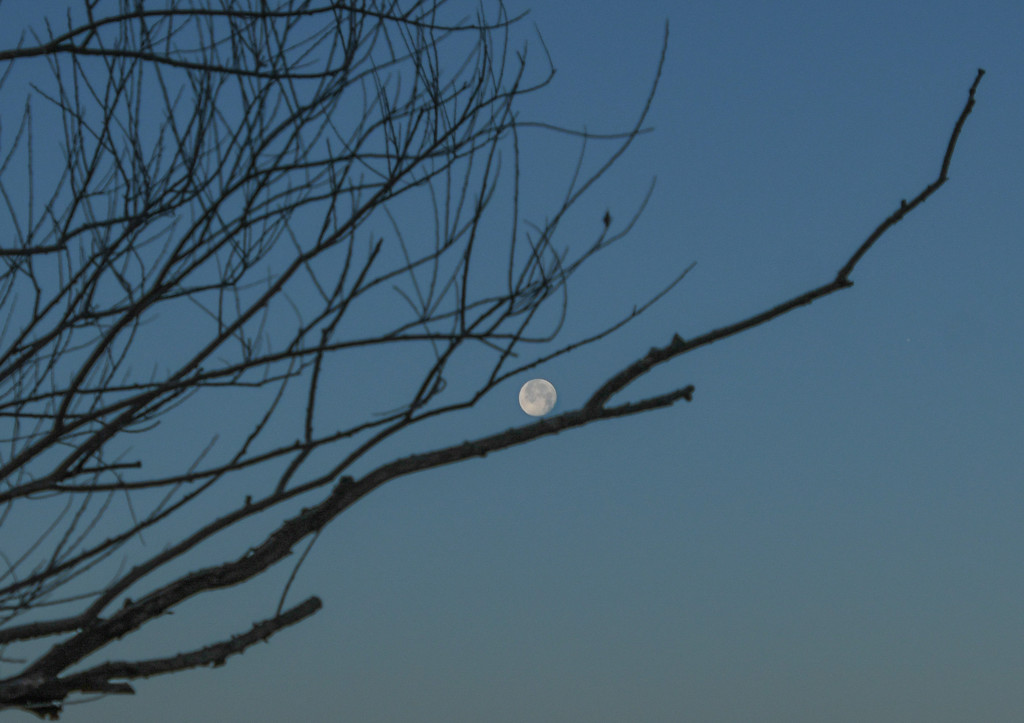 Moon on a Limb by kareenking