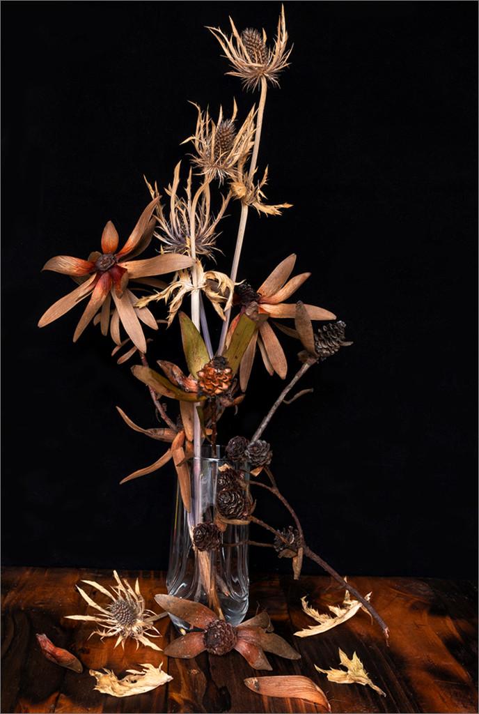 Dry arrangement by mv_wolfie