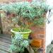 winter plant
