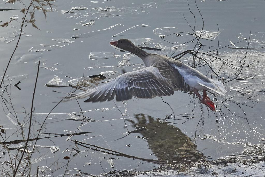 take-off by bpfoto