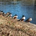 All My Ducks in a Row