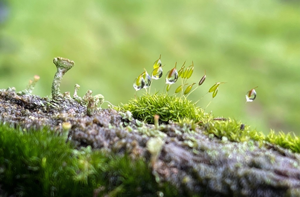 Moss on a log  by tinley23