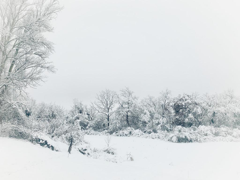 White landscape.  by cocobella