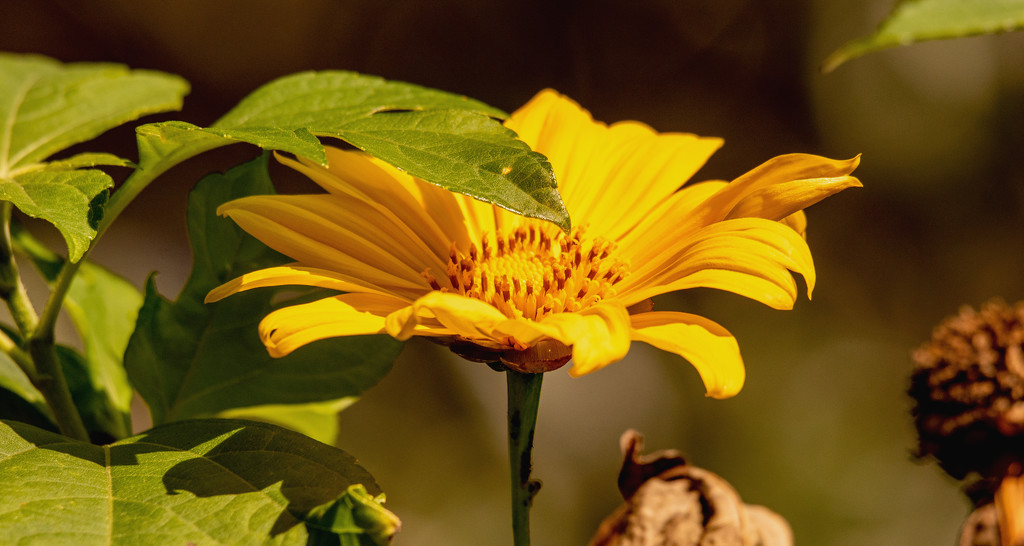 Yellow Flower! by rickster549